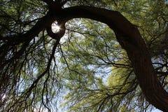 Chispa de Sun en árbol Fotos de archivo