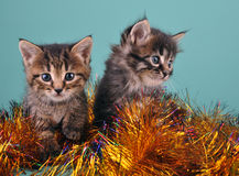 Chistmas portrait of little kittens Royalty Free Stock Image