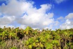 chit mayan tulum δέντρων riveira φοινικών ζου&gam Στοκ Φωτογραφίες