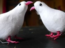 Chit-prata för två vitt fåglar royaltyfri bild