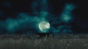 Chita ou pantera preta que correm com a noite em um fundo da Lua cheia ilustração royalty free