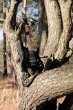 Chitarra sull'albero Immagine Stock