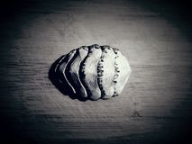 Chiton royalty free stock images