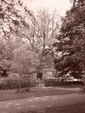 Chittenango tombe s?pia d'arbre de parc d'?tat grande images stock