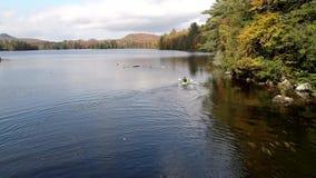 Chittenden Vermont - 20181009 - flyg- surr - mannen paddlar i kajak i sjön i nedgång i Vermont stock video