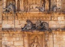 Chittorgarh Citadel Ruins In Rajasthan, India Stock Image