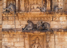 Chittorgarh citadel ruins in Rajasthan, India Stock Image