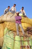 CHITTORGARH, RAGIASTAN, INDIA - 13 DICEMBRE 2017: Primo piano sugli agricoltori sorridenti che caricano lo stover del cereale su  Immagine Stock Libera da Diritti