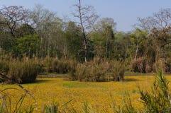 Chitwan国家公园在尼泊尔 北京,中国黑白照片 免版税库存图片