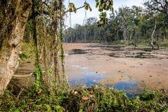 chitwan国家尼泊尔公园 库存照片