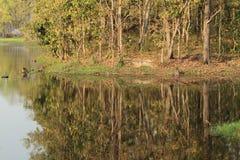 Chitwan尼泊尔密林  免版税库存照片