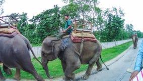 CHITWAN,尼泊尔- 2018年4月09日:大象徒步旅行队在Chitwan国家公园,尼泊尔 库存图片