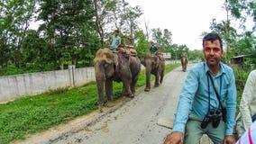 CHITWAN,尼泊尔- 2018年4月09日:大象徒步旅行队在Chitwan国家公园,尼泊尔 库存照片