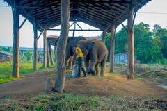 CHITWAN,尼泊尔- 2017年11月03日:有一个大袋的未认出的人被束缚的大象的食物在一个结构下在 库存照片