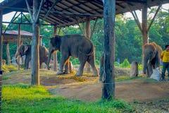 CHITWAN,尼泊尔- 2017年11月03日:有一个大袋的未认出的人被束缚的大象的食物在一个结构下在 图库摄影