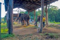 CHITWAN,尼泊尔- 2017年11月03日:有一个大袋的未认出的人被束缚的大象的食物在一个结构下在 库存图片