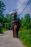 CHITWAN,尼泊尔- 2017年11月03日:未认出的人骑马大象在Chitwan国家公园 库存图片