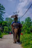 CHITWAN,尼泊尔- 2017年11月03日:未认出的人骑马大象在Chitwan国家公园 免版税库存照片
