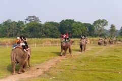 CHITWAN,尼泊尔- 2014年10月27日:走在草坪的大象在大象徒步旅行队游览Chitwan国家公园 Chitwan全国Pa 免版税库存图片