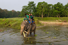 CHITWAN, NEPAL-MARCH 27 :大象徒步旅行队27日2015年在Chitwan, Ne 免版税库存图片