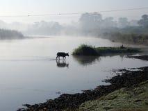 chitwan национальный парк Стоковая Фотография RF