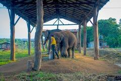 CHITWAN, НЕПАЛ - 3-ЬЕ НОЯБРЯ 2017: Неопознанный человек с мешком еды для прикованных слонов под структурой на Стоковое Изображение