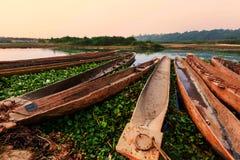 Chitwan стоковые изображения rf