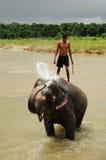 chitwan elefant nepal np för bad Arkivfoton
