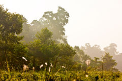 Chitwan jungles Royalty Free Stock Image