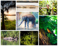 Chitwan nation park Royalty Free Stock Image