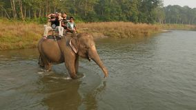 CHITWAN NATIONAL PARK, NEPAL - 10 October 2018 Big gray elephant with tourists in special seat on back walking in river. Safari trekking tour. Rural scene stock footage