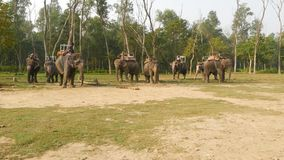 CHITWAN NATIONAL PARK, NEPAL - 10 October 2018 Mahouts men, asian traditional Indian elephant riders wait for tourists stock footage