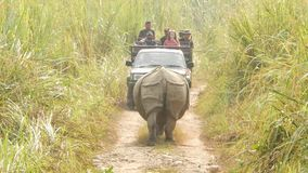 Chitwan National Park, Nepal - 10 October 2018 Tourists in car and Indian one-horned Rhinoceros crossing jungle road at stock footage