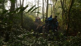 CHITWAN NATIONAL PARK, NEPAL - 10 October 2018 Tourists having trekking tour. Elephants with people on backs walking in. Forest during safari observing stock video footage