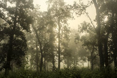 Chitwan National Park in Nepal Royalty Free Stock Photos