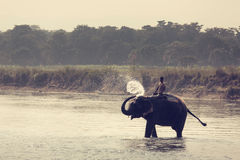 CHITWAN NATIONAL PARK, SAURAHA, NEPAL- CIRCA NOVEMBER 23, 2014: Royalty Free Stock Photos