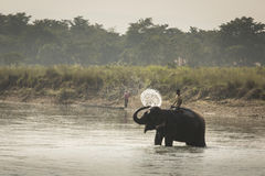 CHITWAN NATIONAL PARK, SAURAHA, NEPAL- CIRCA NOVEMBER 23, 2014: Stock Photo