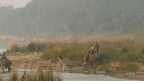 CHITWAN NATIONAL PARK, SAURAHA, NEPAL - 10 October 2018 Mahout riding Asian elephant crossing tropical River. Trainers stock video
