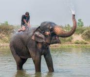 Elephant swimming royalty free stock photos