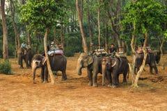 Elephant taxi. Walking along the national park on elephants. Riding on elephants royalty free stock photos