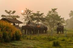 CHITWAN, NEPAL - 27 DE OCTUBRE DE 2014: Los elefantes que esperan safari del elefante viajan en el parque nacional de Chitwan del Foto de archivo