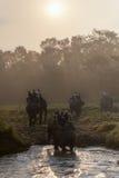 CHITWAN, NEPAL - 27 DE OUTUBRO DE 2014: Elefantes que cruzam o rio na excursão do safari do elefante no parque nacional de Chitwa Imagem de Stock Royalty Free