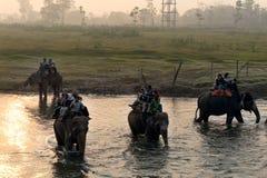 CHITWAN, NEPAL - 27 DE OUTUBRO DE 2014: Elefantes que cruzam o rio na excursão do safari do elefante no parque nacional de Chitwa Fotografia de Stock