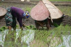 Chitwan Nepal July 23 2020 :Nepali women working in the farmland from Chitwan Nepal