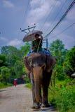 CHITWAN NEPAL, LISTOPAD, - 03, 2017: Niezidentyfikowanego mężczyzna jeździecki słoń w Chitwan parku narodowym Zdjęcia Royalty Free