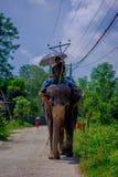 CHITWAN NEPAL, LISTOPAD, - 03, 2017: Niezidentyfikowanego mężczyzna jeździecki słoń w Chitwan parku narodowym Zdjęcie Royalty Free