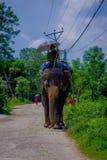 CHITWAN NEPAL, LISTOPAD, - 03, 2017: Niezidentyfikowanego mężczyzna jeździecki słoń w Chitwan parku narodowym Obrazy Stock
