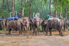 CHITWAN, NEPAL 27. MÄRZ: Elefantsafari 27, 2015 in Chitwan, Ne Stockbild