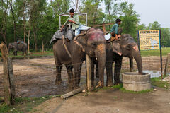 CHITWAN, NEPAL 27. MÄRZ: Elefantsafari 27, 2015 in Chitwan, Ne Lizenzfreie Stockbilder