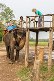 CHITWAN NEPAL-MARCH 27: Elefantsafari 27, 2015 i Chitwan, Ne Arkivbilder